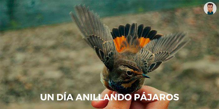Un día anillando pájaros