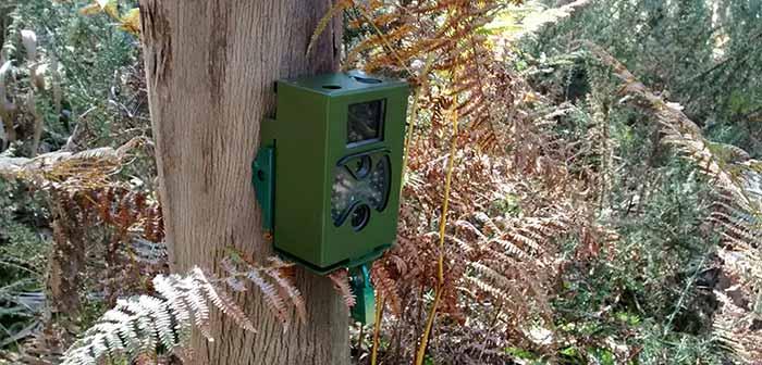 Cámara de fototrampeo en un pino