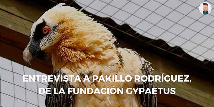 Entrevista a Pakillo, director técnico del centro de cría del quebrantahuesos de Jaén