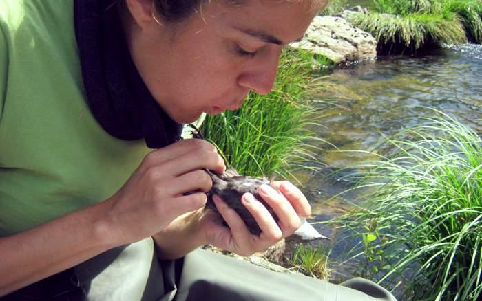 Ana con un mirlo acuático