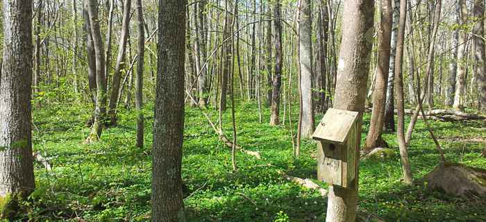 Caja-nido en medio del bosque