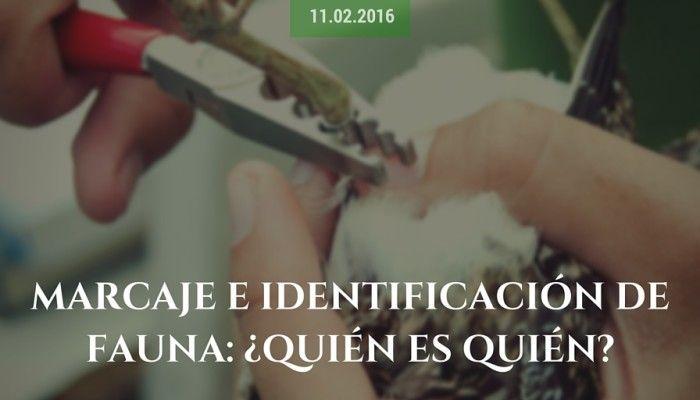 Marcaje e identificación de fauna: ¿quién es quién?
