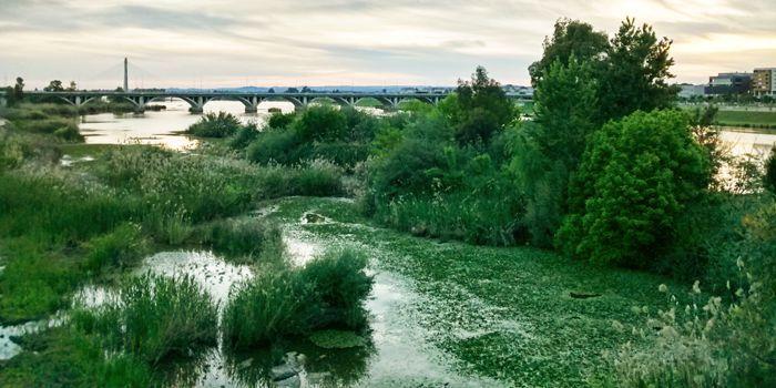 Vegetación en el puente viejo
