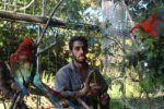 Jaulón de los guacamayos