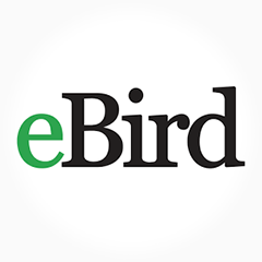 Logo de eBird