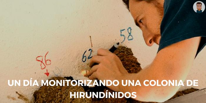 Un día monitorizando una colonia de hirundínidos